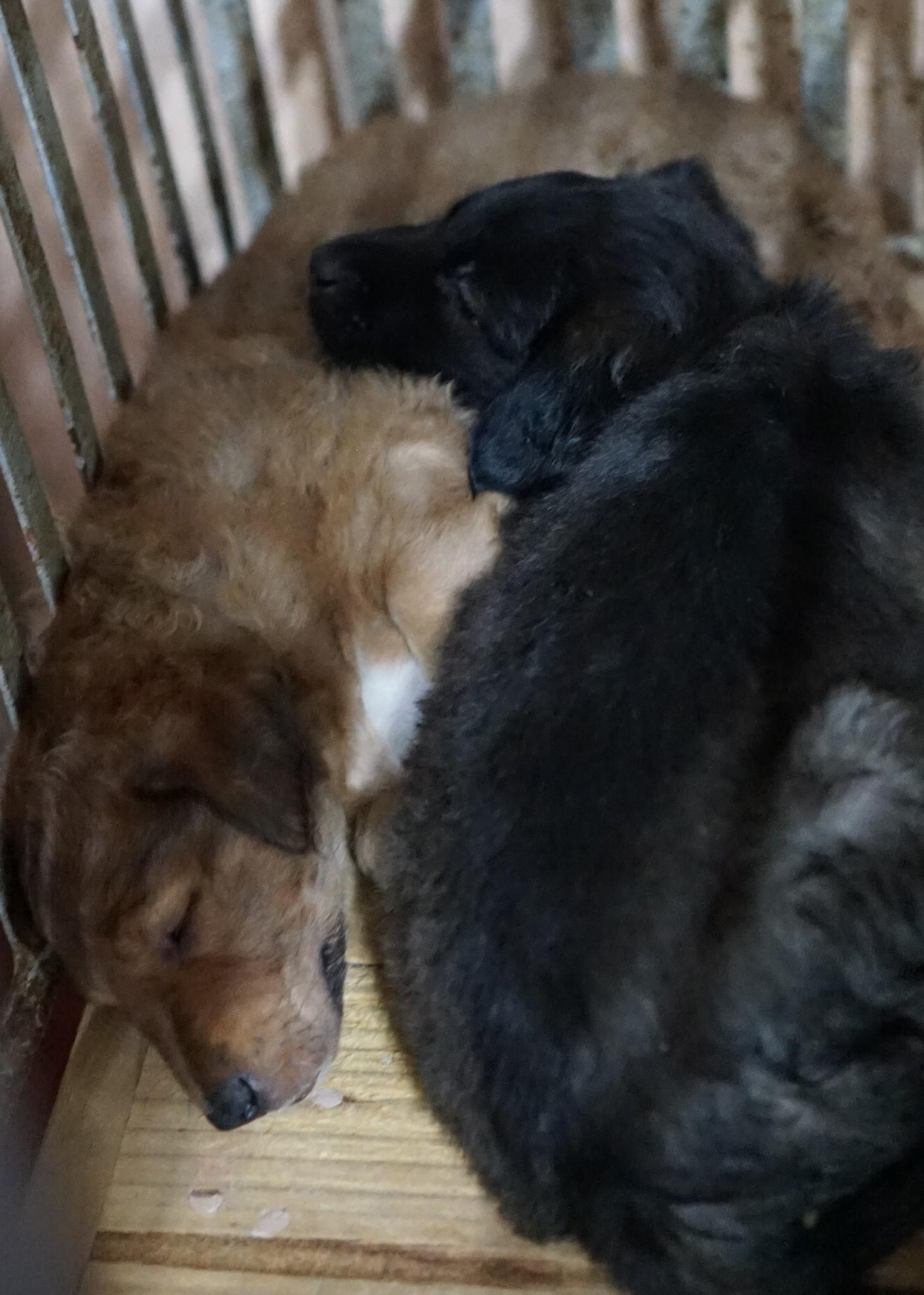 Release/PETA